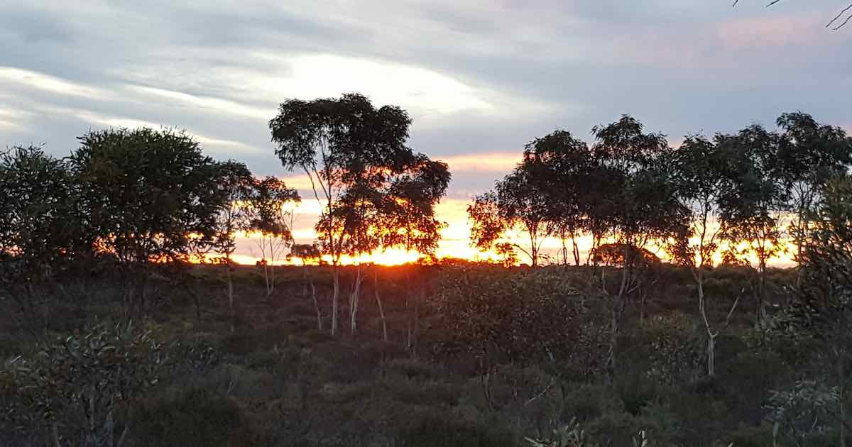 western australia field surveys