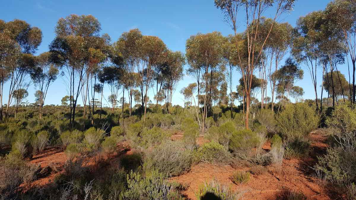 flora assessment perth