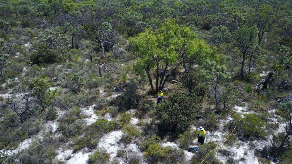 vegetation and flora assessment