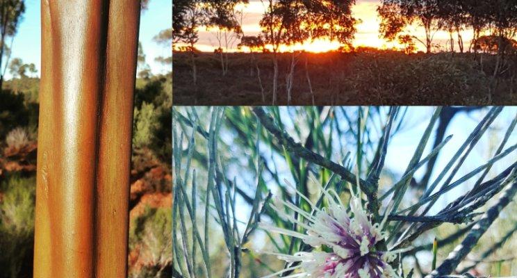 flora fauna surveys forrestania