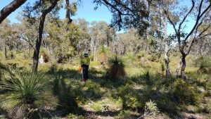 flora and vegetation survey