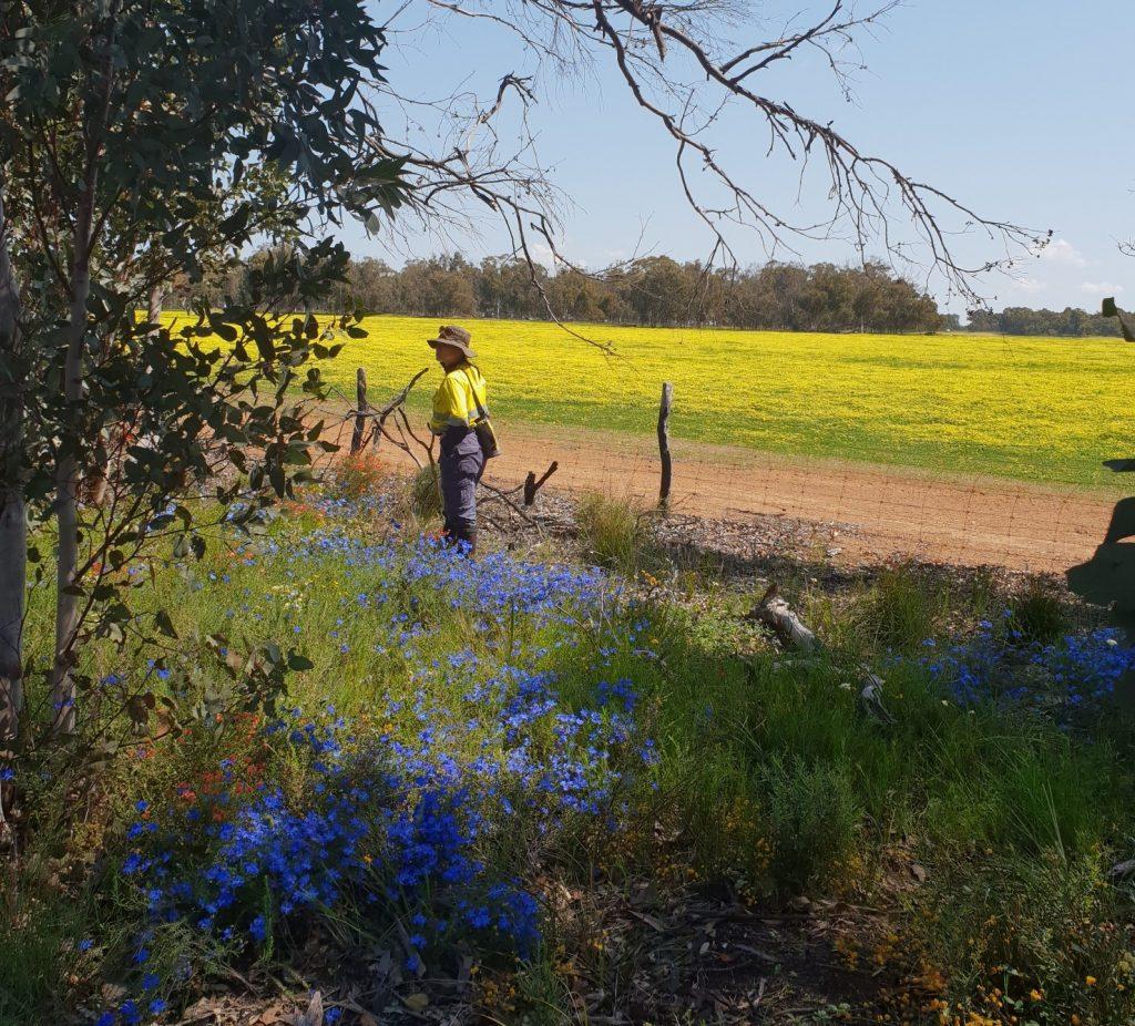 flora and fauna surveys